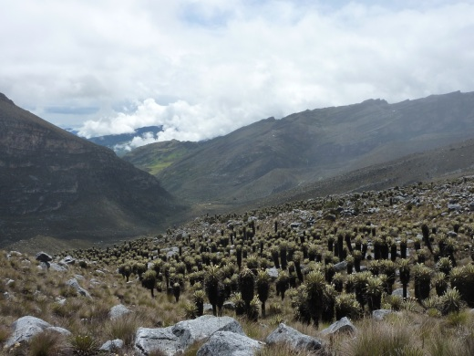 The view on the way up through the Paramo when the rain finally gave me a moment.